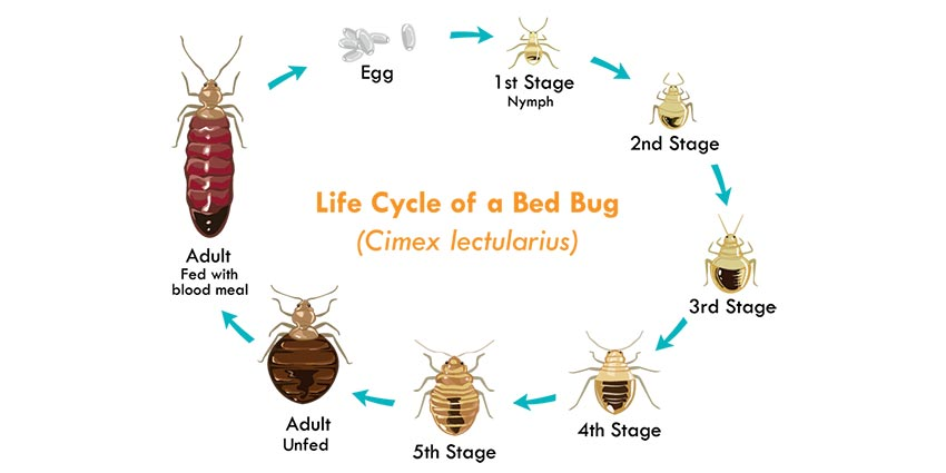 Buckeye Exterminating, Inc. - Bed Bugs